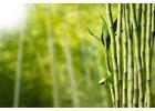 Bambusové oblečení