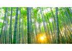 Vlastnosti bambusového oblečení a péče o materiál
