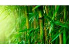 Bambus - testy a recenze