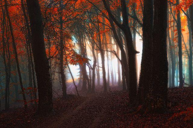 Astralni_cesta_lesem