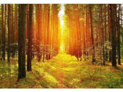 cesta ke svetlu