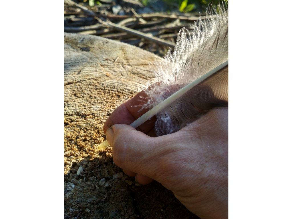 Přírodní husí brk na psaní. Pagania Viking Workshops