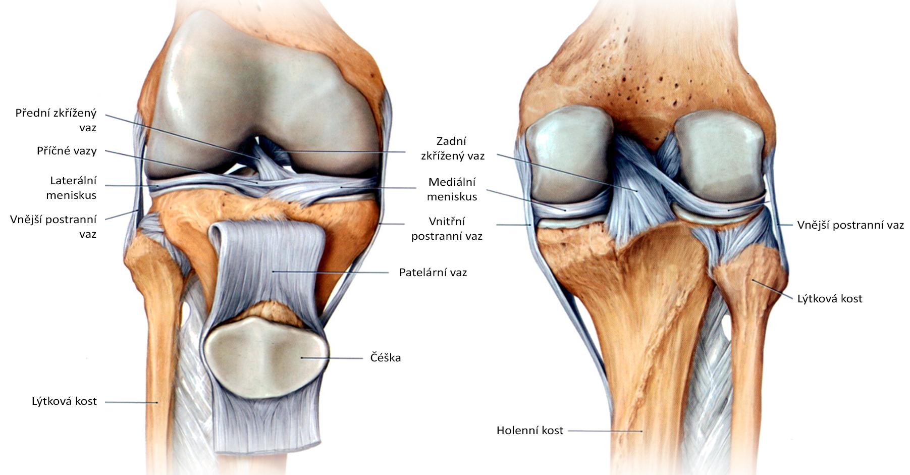 knee_side_front