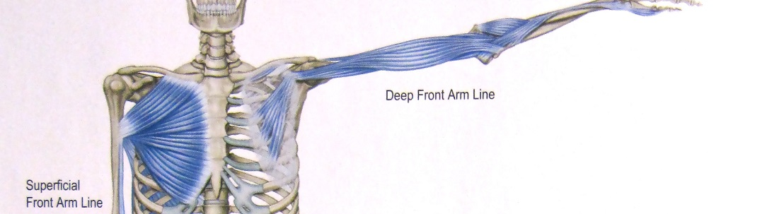 arm_pec_meridians 1084x303