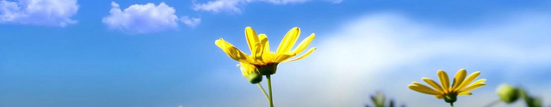 flowers1083x211