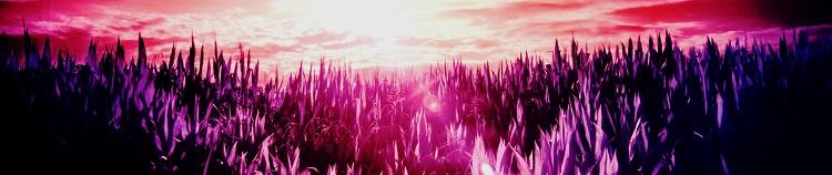 red-sun-purple-dream750