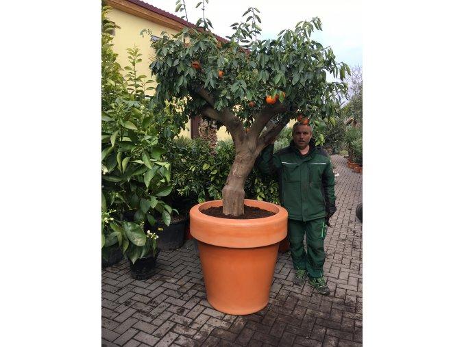 Květináč Magnolia 90, lehký plastový květináč, barva terracota.