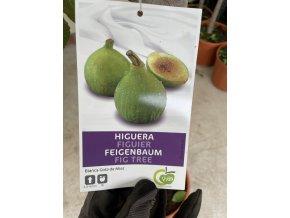 Ficus carica, fíkovník. cca 170-190 cm
