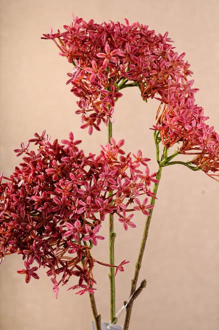 Nové aranžovací květiny - lilie, sasanky, bauhinie, chrpy, kopr a další..