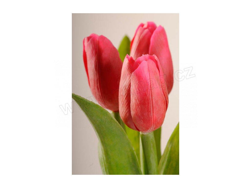 107R2 Francouzský umělý tulipán sytě červený 40 cm