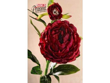 Dekorativní květina pivoňka vínová - Paramit - F104-R