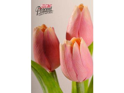 107A2 Francouzský tulipán tmavě broskvová 40cm