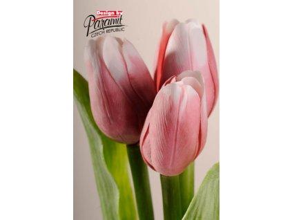 107P4 Francouzský tulipán tmavě růžovo bilý 40cm