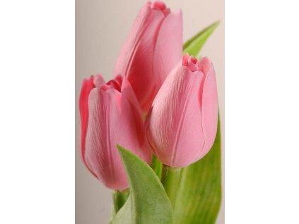 107P5 Francouzský umělý tulipán pastelově růžový 40 cm