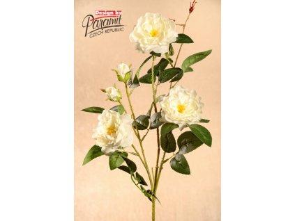 3 45C Růže zahradní krémová 85cm