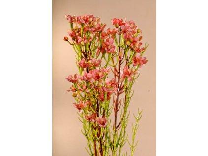 F222 P Umělá květina Waxflower růžová 78 cm