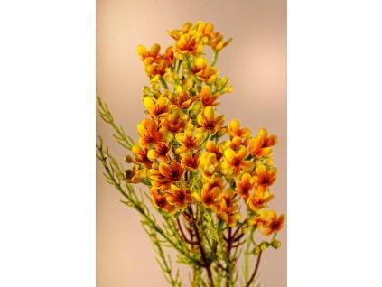 F222 Y Umělá květina Waxflower žlutá 78 cm