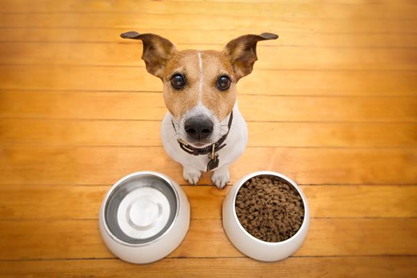 Kŕmna dávka granúl pre psa