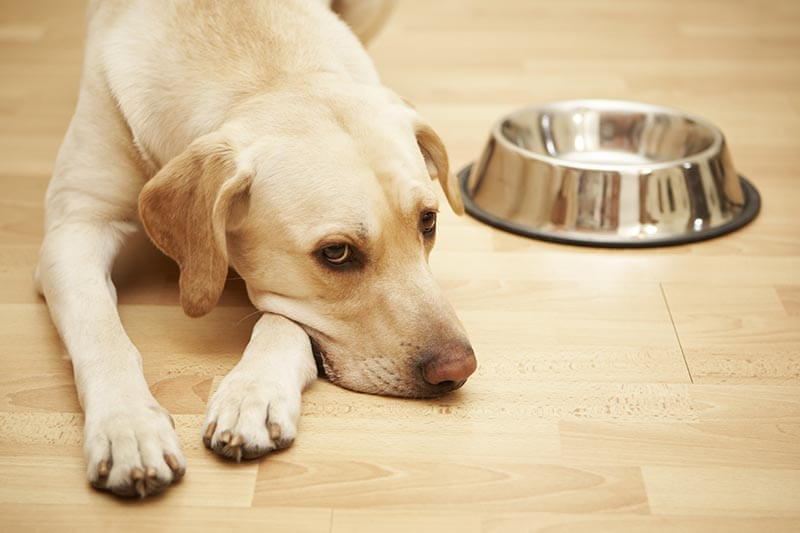 Prečo pes nechce jesť granule