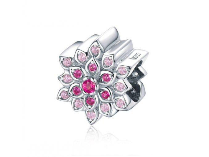 Růžový květ 1