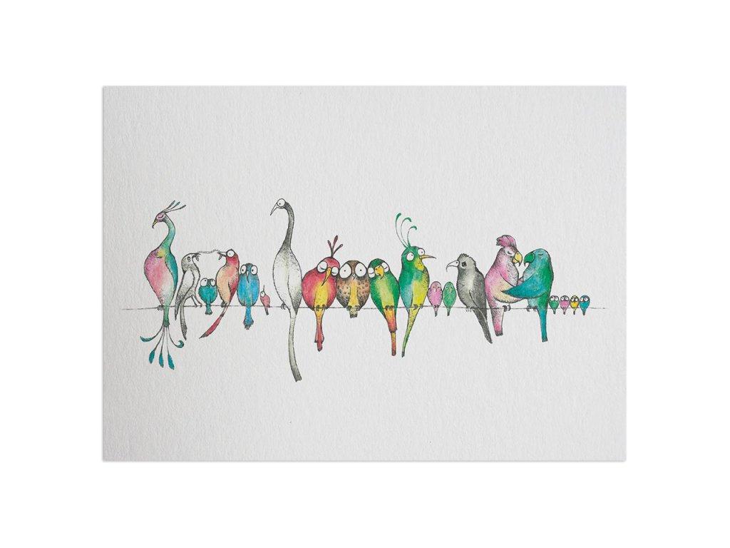 pohlednice ligarti ptaci prehlidka