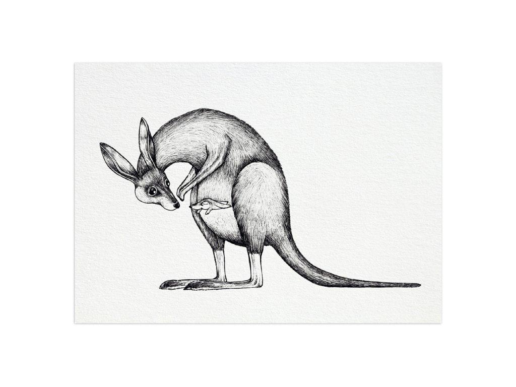 pohlednice ligarti klokan