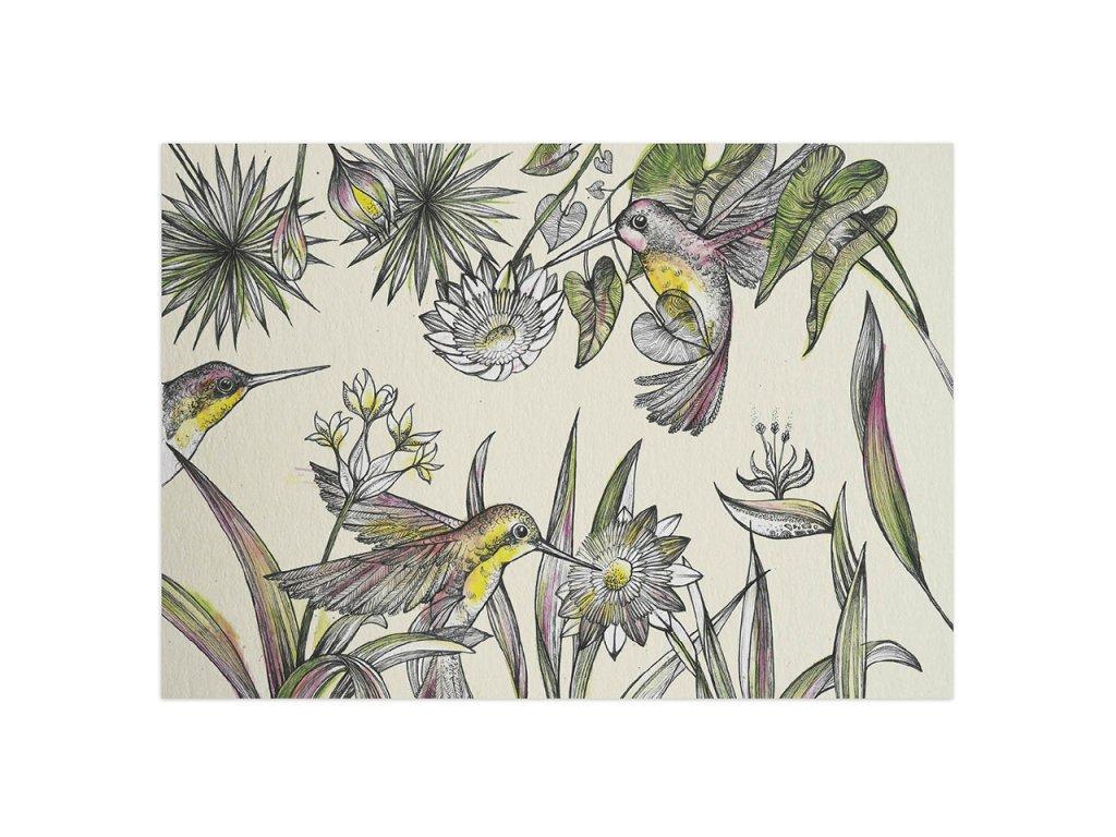 pohlednice ligarti kolibrici