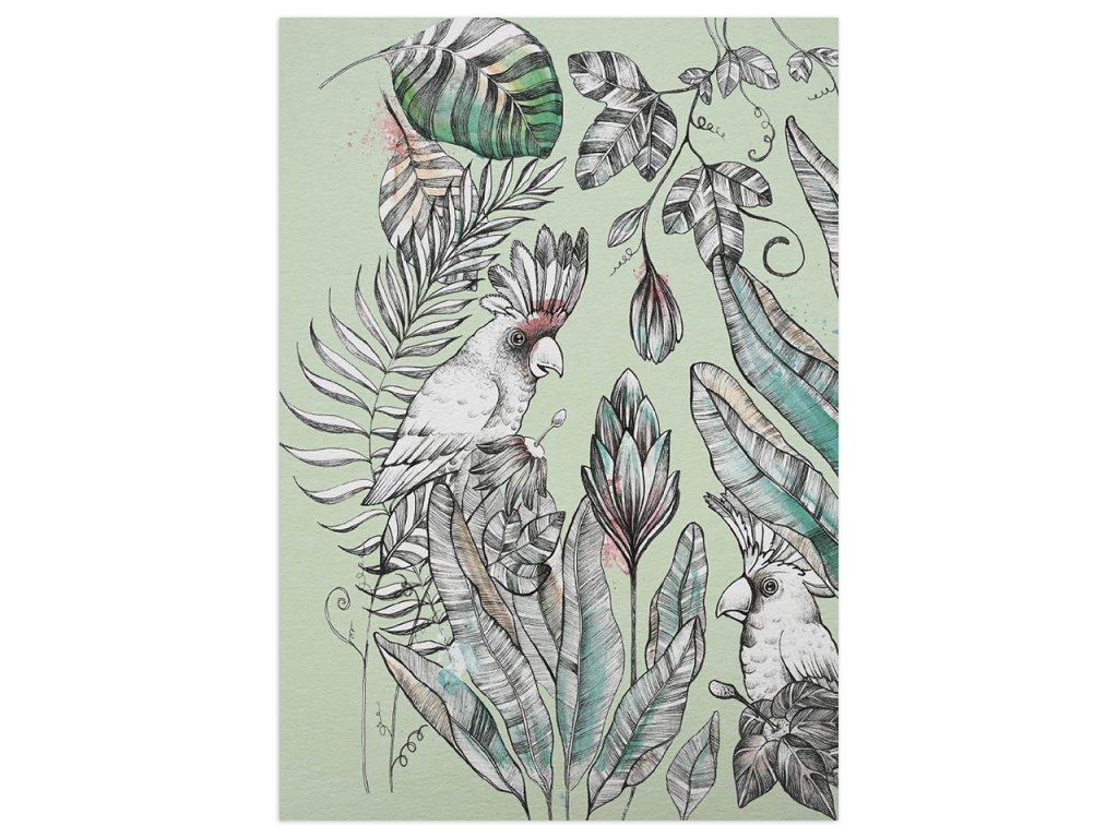 pohlednice ligarti kakadu 1