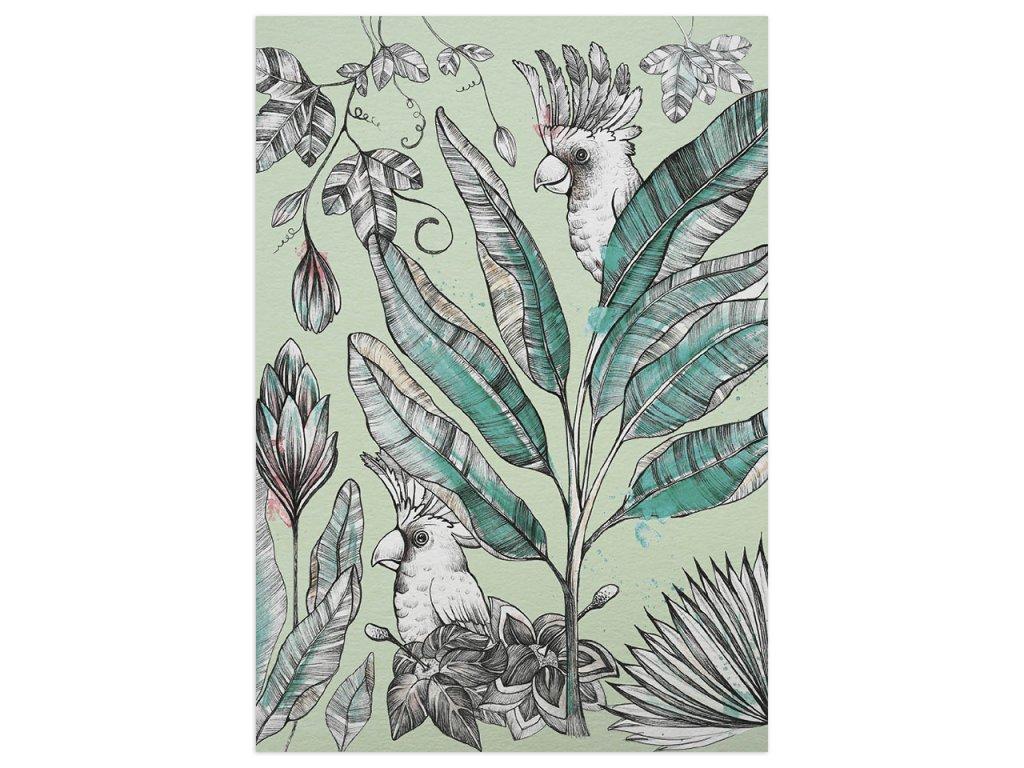 pohlednice ligarti kakadu 2
