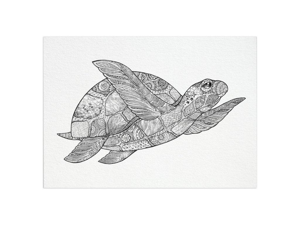 pohlednice ligarti morska zelva