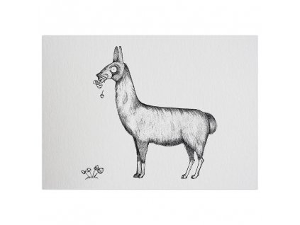 pohlednice ligarti lama