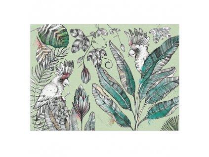 pohlednice ligarti kakadu