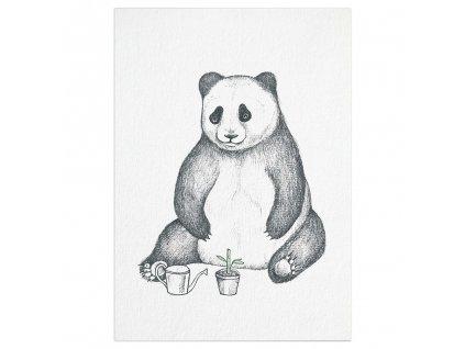 pohlednice ligarti panda