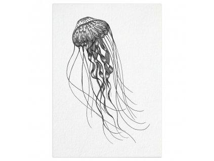 pohlednice ligarti meduza
