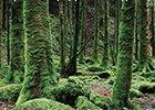 Trees Postcards