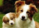 Dogs Postcards