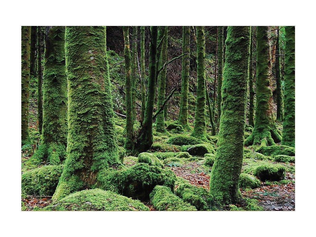 8012 2 pohlednice divoky les