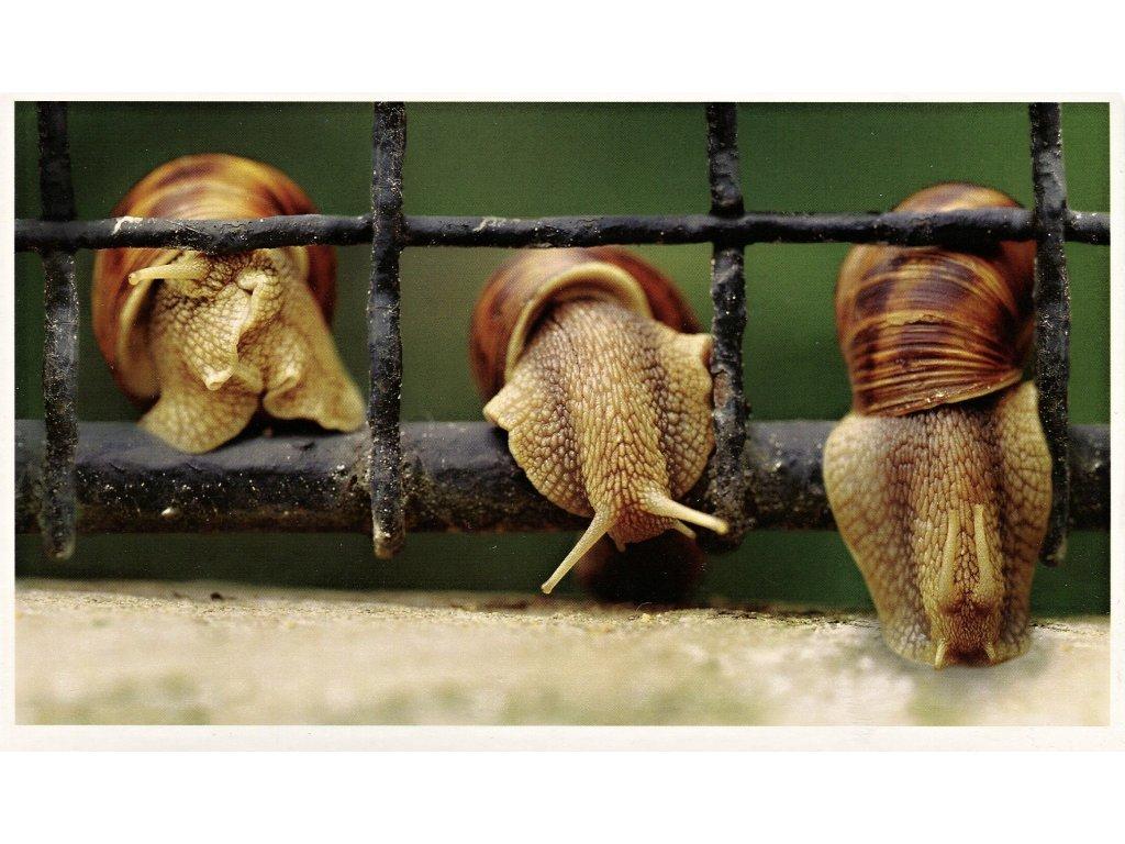 Postcard Snails