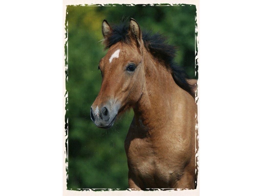 Postcard foal welsh part-bred