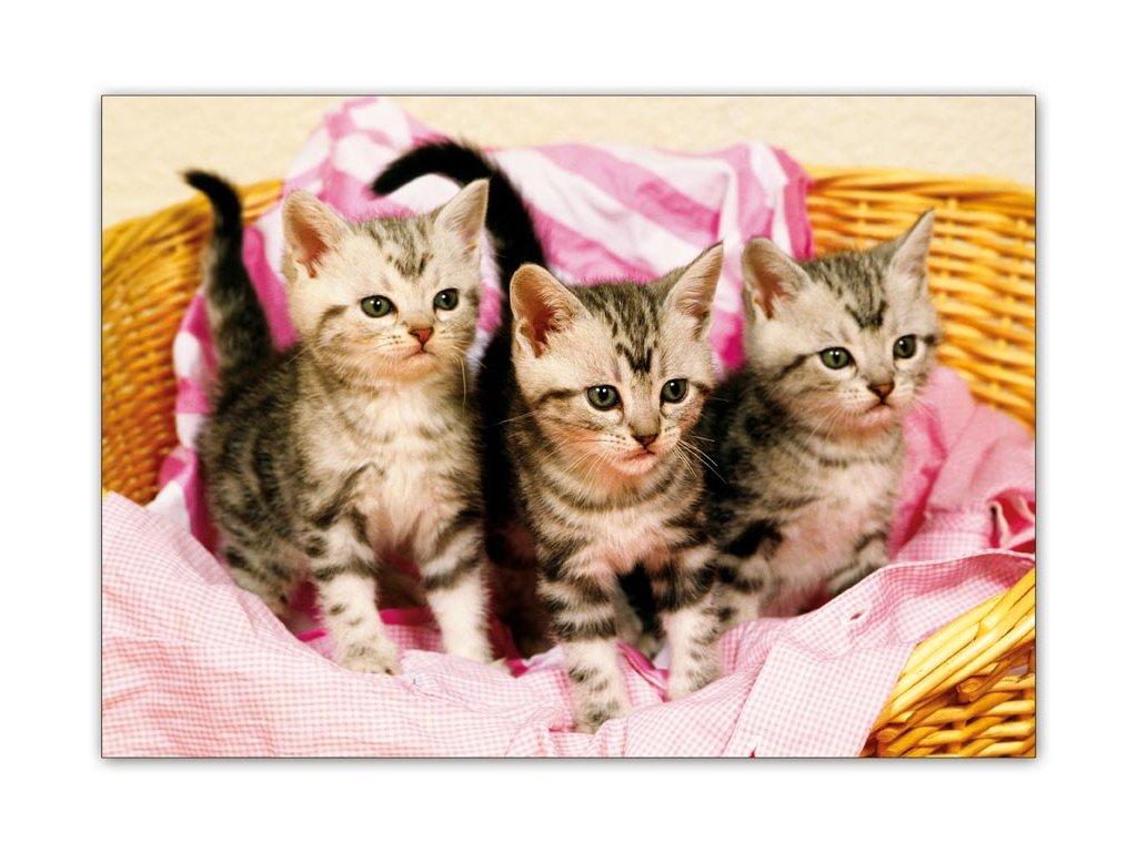 Postcard Kittens in a laundry basket