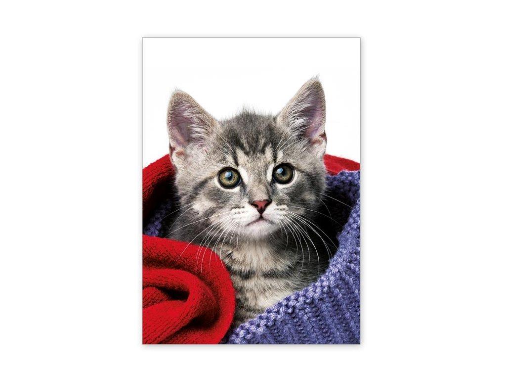 Kitten Postcard between sweaters
