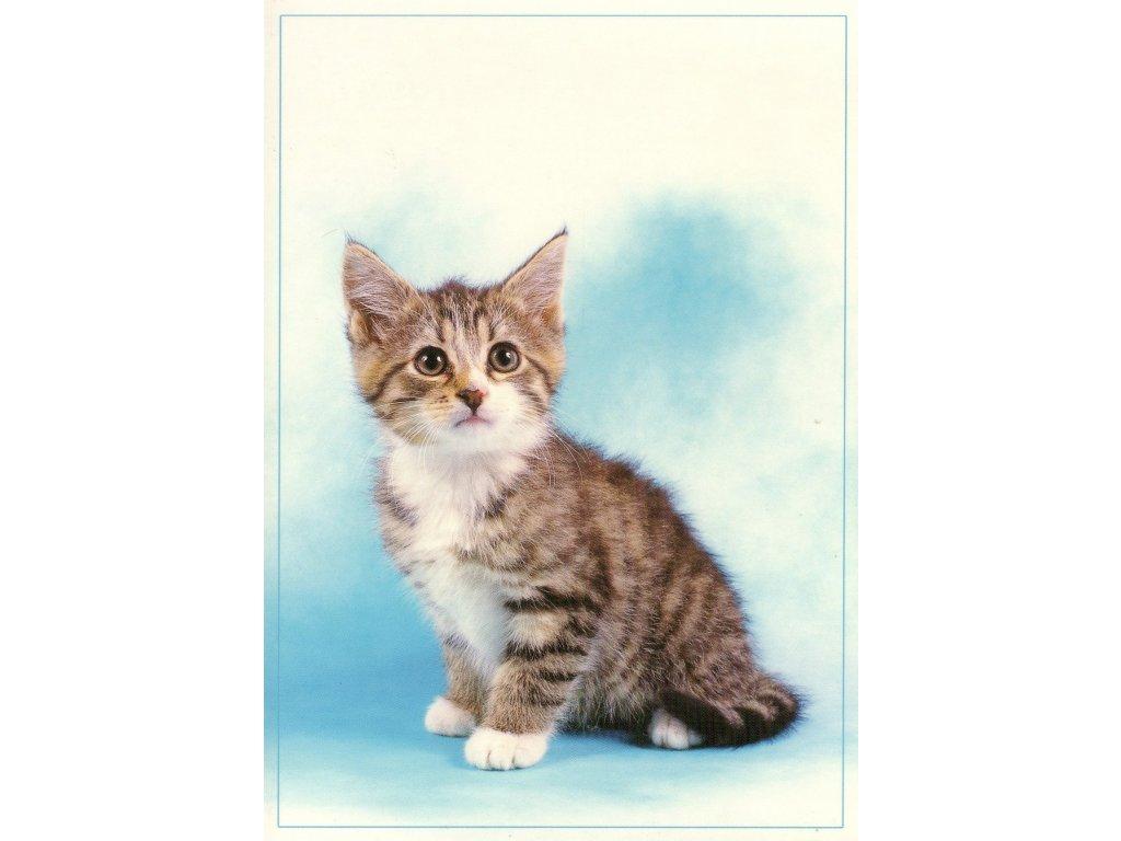 6824 1 pohlednice kote s modrym pozadim
