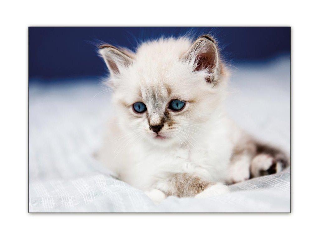 Postcard Snow White Kitten
