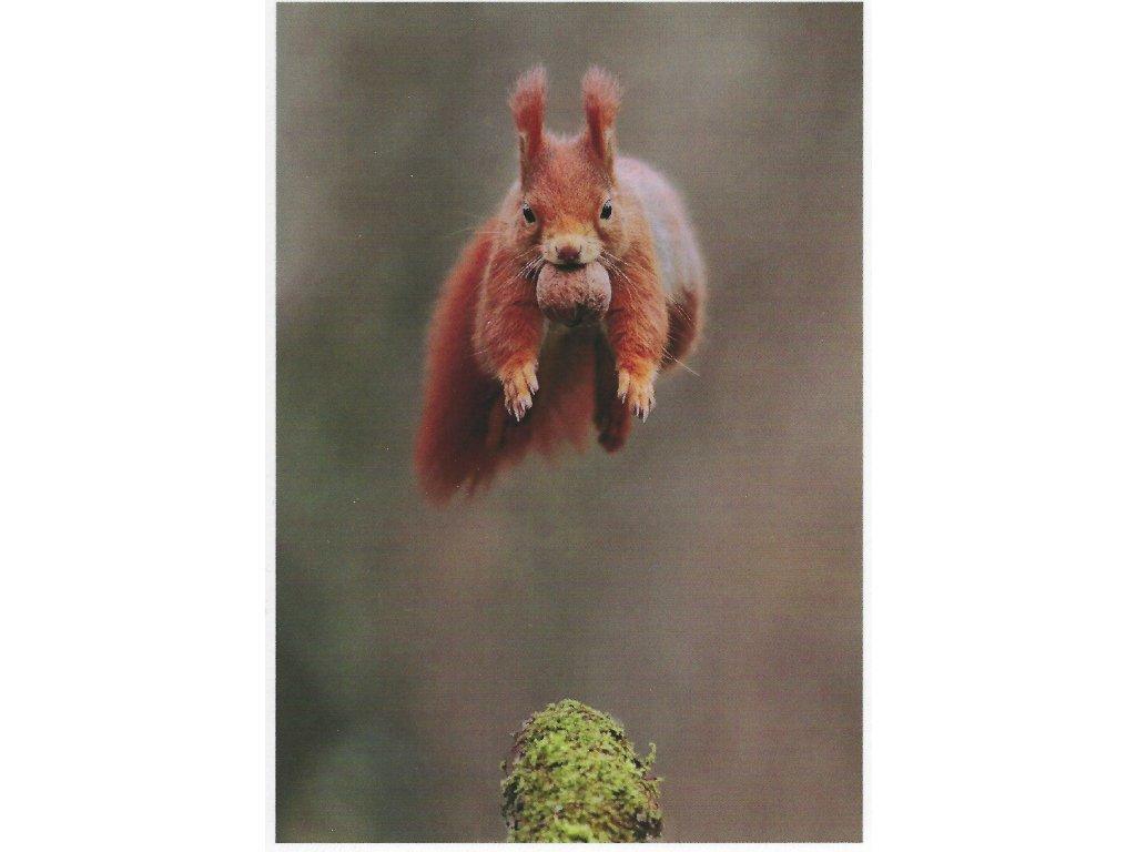 Postcards Flying Squirrel