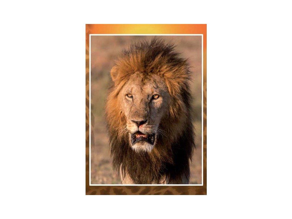8297 3 pohlednice lev