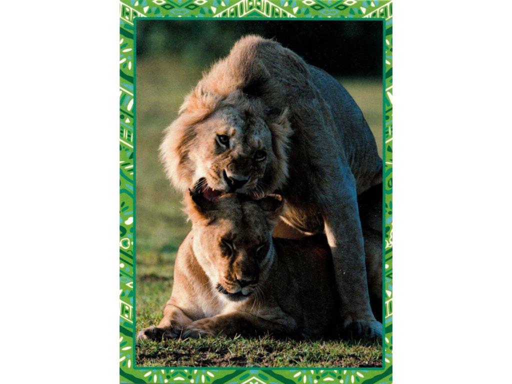 Postcard Lions