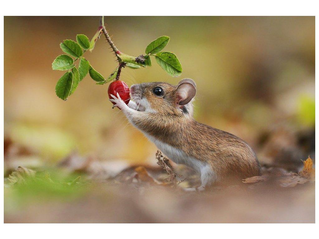15428 3 pohlednice mysice se sipkem