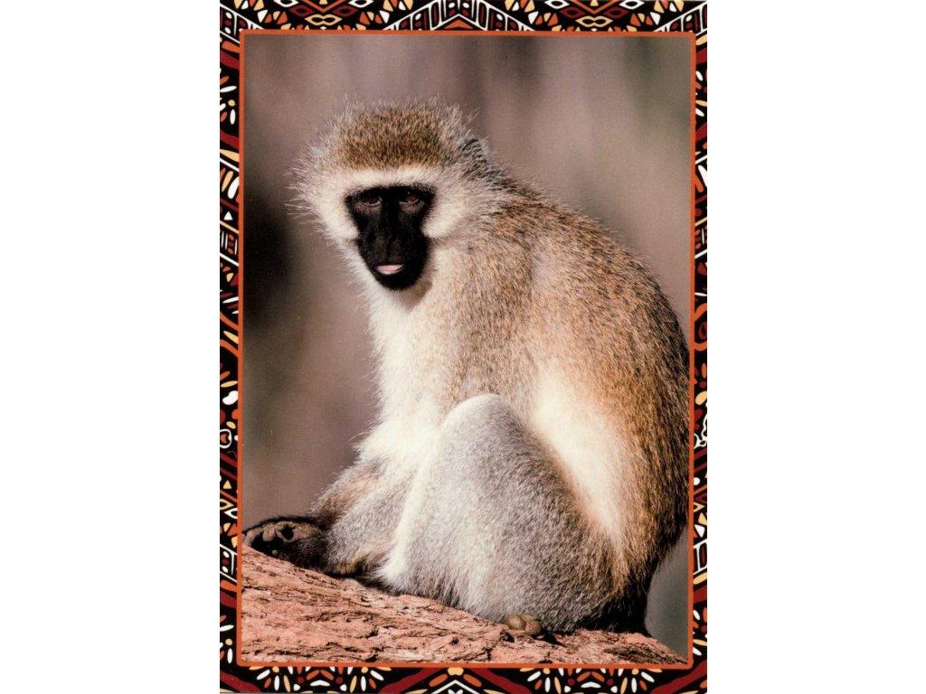 Postcards Monkey