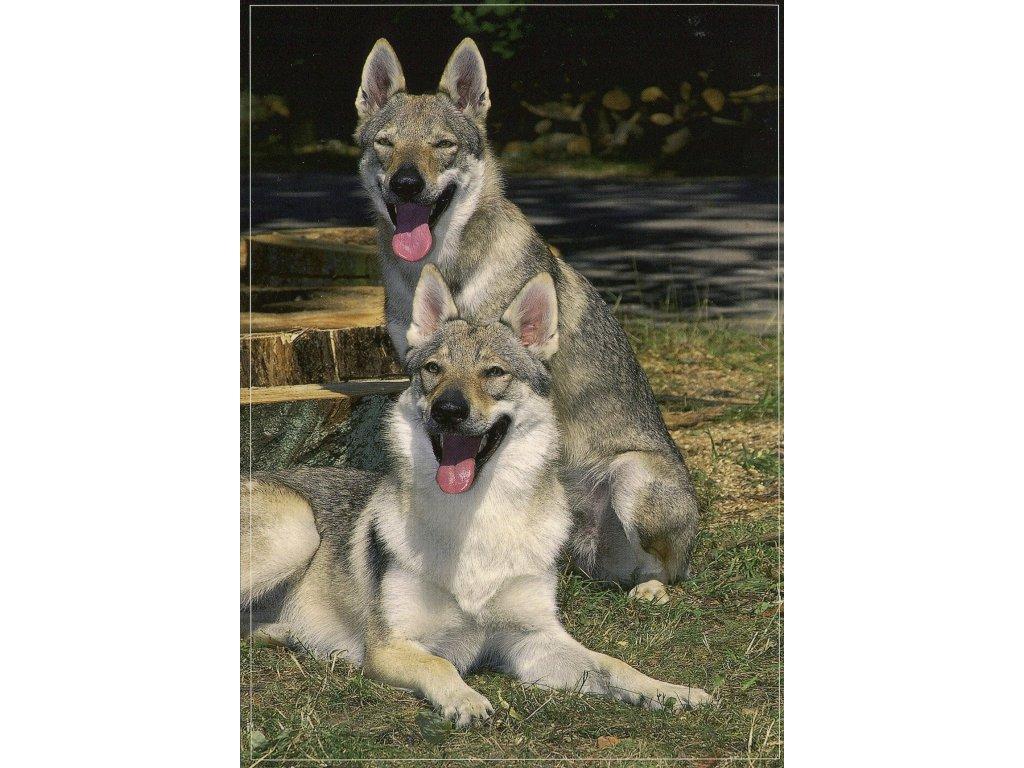 281 pohlednice pes ceskoslovensky vlcak