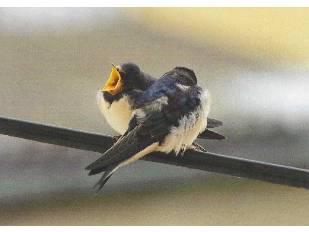 Postcard Birds